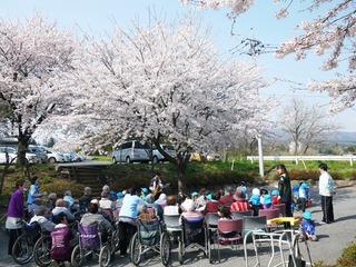 きょうの午後は、桜のお花見。いつも来てくださるボランティア、エンドレス・サックスの片貝さん。こども園のこどもたちとの交流と充実したひとときでした。
